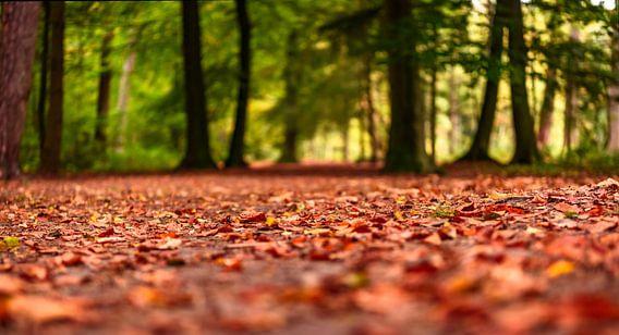 Herfst gebladerte