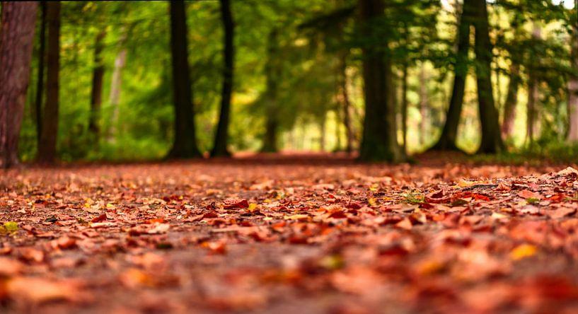 Herfst gebladerte van Gea Gaetani d'Aragona