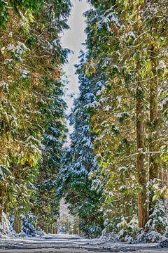 """""""Hoge bomen vangen veel ...... sneeuw!"""" van Ivo Schut Fotografie"""