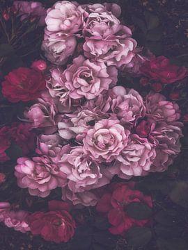 Donkerroze rozen van Marina de Wit