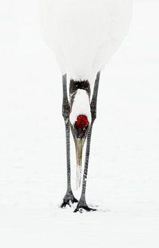 Japanse kraanvogel van Gladys Klip