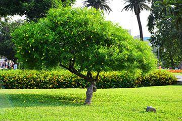 boom met gele bloemen von Gerrit Neuteboom