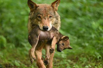 wolf met jong van Eveline Lenderink