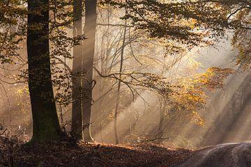 Sonne durchbricht den Nebel im Naturpark Rheingau-Taunus van