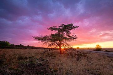 Arbre du coucher du soleil