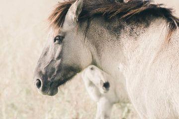 Konikpaard met veulen van Kimberley Jekel