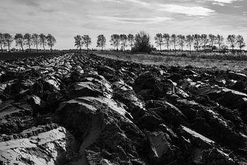 De Vlaamse Polders van Trees Rommelaere