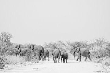 Elefantenfamilie in Schwarz und Weiß   Namibia, Etosha Nationalpark von Suzanne Spijkers