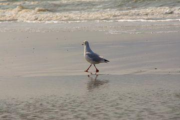 jonge meeuw loopt trots over zijn strand van tiny brok