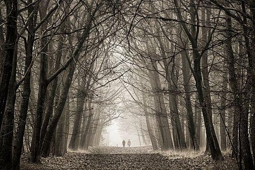 Eenzaam in de mist