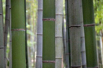 Bambuswald in Grau und Grün - Bambuseae von whmpictures .com