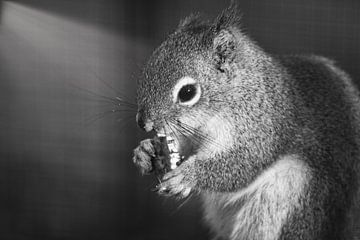 Een eekhoorn van Wendy Tellier - Vastenhouw