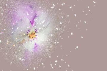 Blumen-Zauber sur Ursula Di Chito
