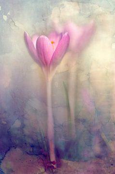 Krokus lentebloem van Annie Snel