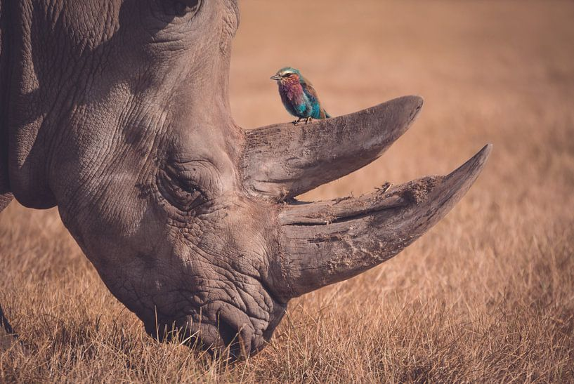 Rhinocéros avec oiseau en milieu naturel sur Hendrik Jonkman