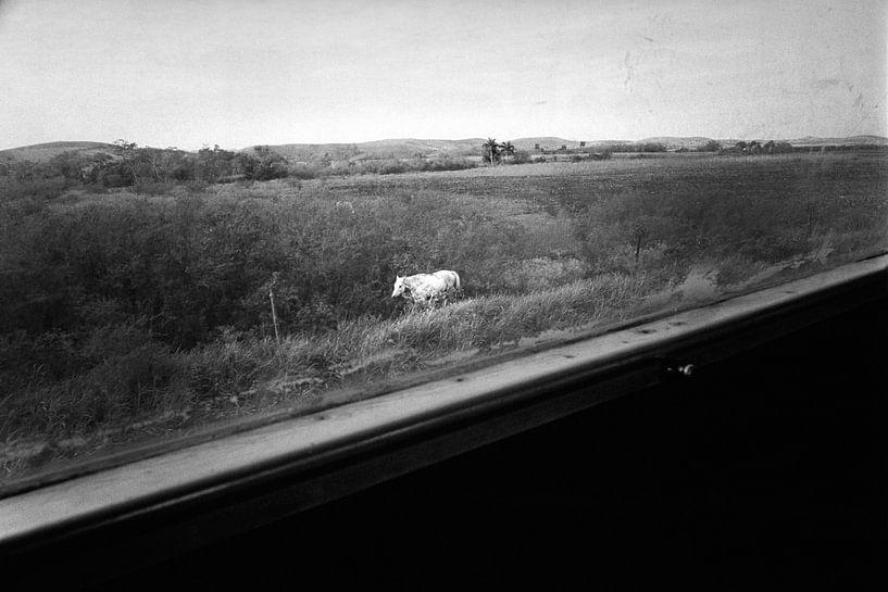 The White Horse van Henri Berlize