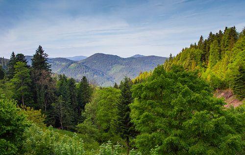 Schwarzwald-Panorama von Ursula Di Chito