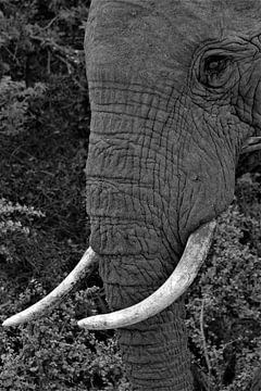 olifant van Christiaan Van Den Berg