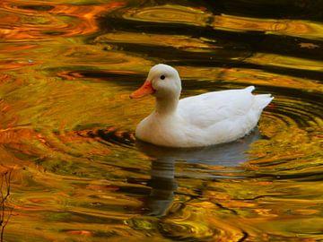 Witte eend op het water von Joke te Grotenhuis