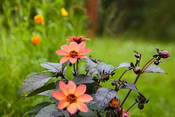 Frühlingsblumen von Flowers by t.ART