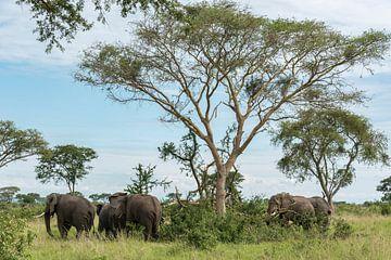 Afrikaanse Olifant von Albert van Heugten