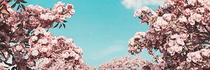 Japanse kersenbloesems tegen blauwe lucht van Besa Art