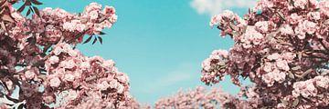 japanische Kirschblüten vor blauem Himmel von Besa Art