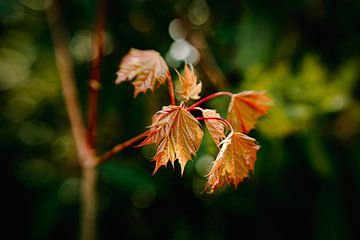 Strong Flora van Hiske Boon