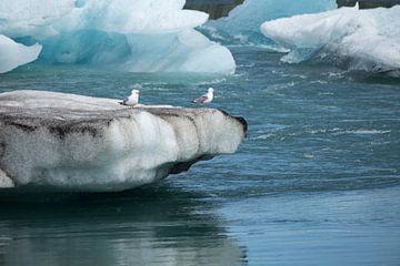Jökulsarlon gletsjermeer met meeuwen van Ewan Mol