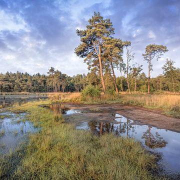 Rustige heide met een water pond_4 van Tony Vingerhoets