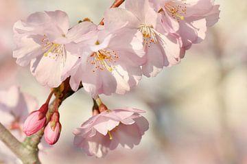 parfum de printemps sur Violetta Honkisz