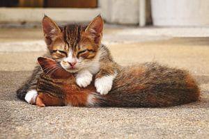 Slapende kittens von Carina Stroo Cloeck