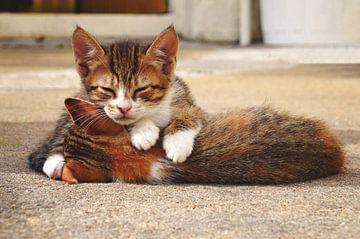 Slapende kittens van Carina Stroo Cloeck