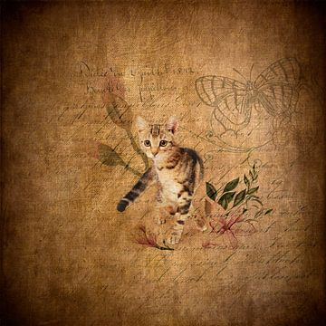Kattenverhaal van Karin Schwarzgruber