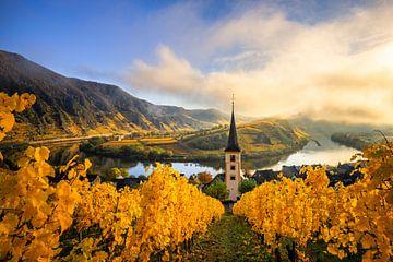 Moselschleife mit Kirche un Weinreben im Herbst in  Bremm am Morgen von Fotos by Jan Wehnert