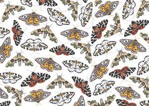 Papillons de nuit sur une toile blanche sur Jasper de Ruiter