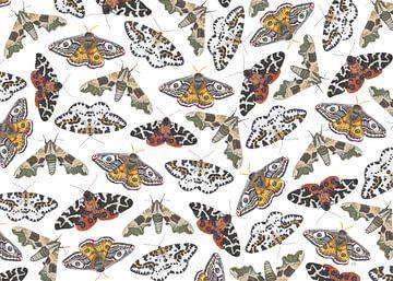 Nachtvlinders op een wit doek