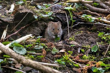 Schattige muis in het bos. van Robbie Nijman