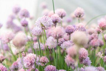 Schnittlauch Blumen von Made By Jane