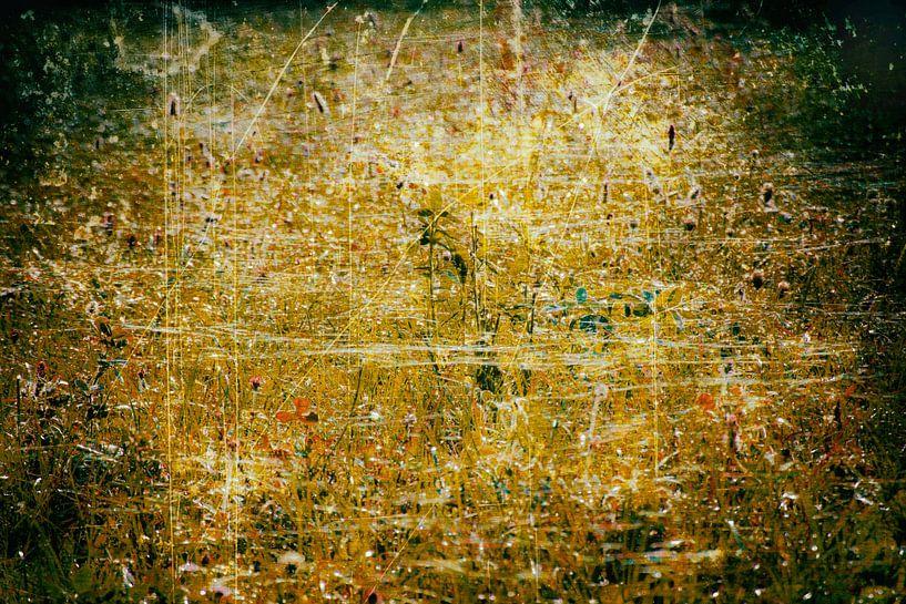Gouden gloed van Ferry Noothout