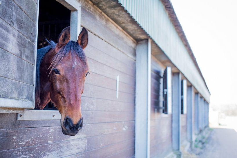 paard kijkt naar buiten van Marloes Hoekema