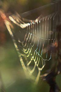 Regenboogweb van