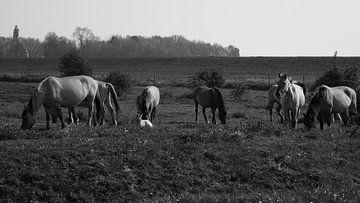 Wilde paarden met veulen von Tim van den Berg