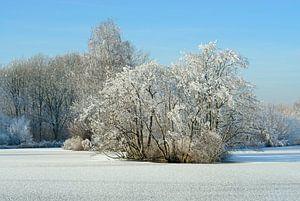 Bevroren plas met berijpte winterboom (2)