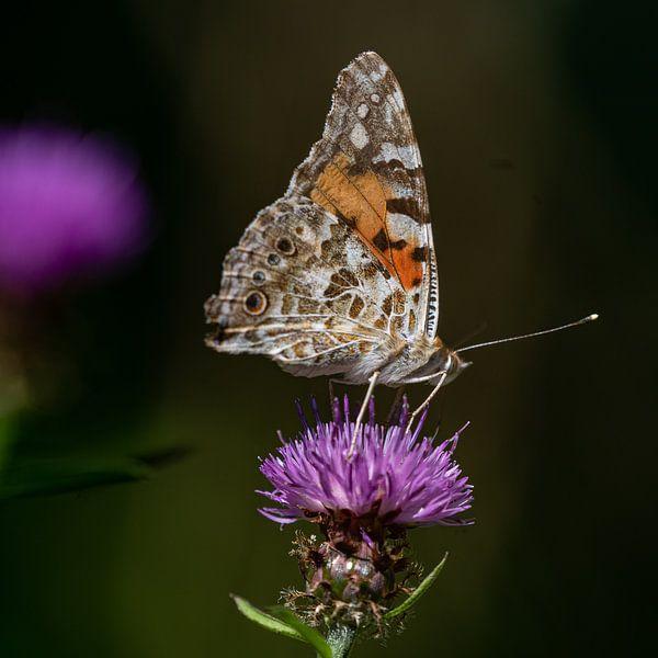 Vlinder op bloem van Fokko Erhart