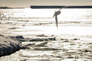 Vogel in tegenlicht Antarctica