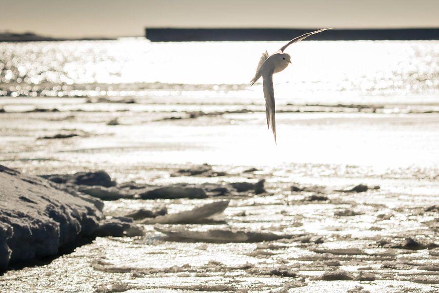 Vogel in tegenlicht Antarctica van Eefke Smets