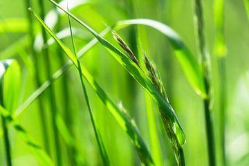 gras in de zon macro van Dörte Stiller