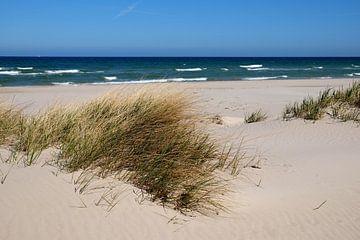 Duinen in de wind van Ostsee Bilder