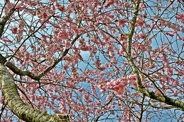 roze lente bloesem van Pyter de Roos
